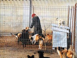 Ira und die Hunde