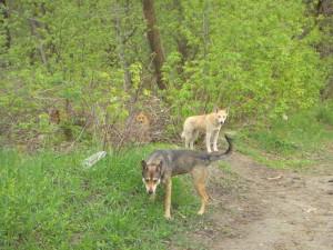 Hunde im wald3